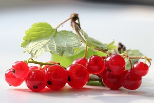 Красная смородина при беременности: полезные свойства и несложные рецепты