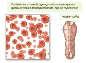 Фолиевая кислота при беременности: пить или не пить?