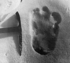 Самые известные случаи встреч со снежным человеком