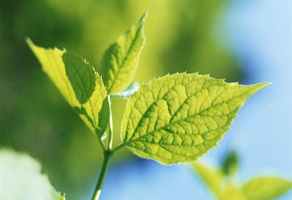 Садоводство. Защита растений