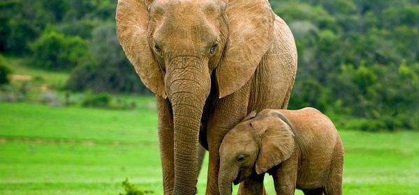 Топ крупнейших позвоночных животных в мире