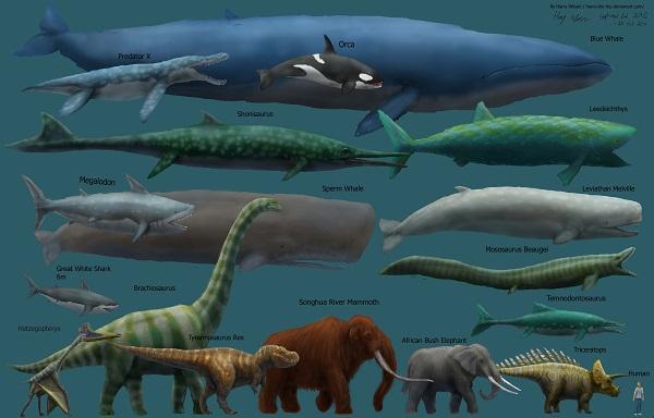 Размеры животных