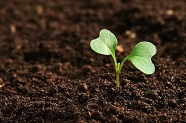 Повысить плодородие земли 4