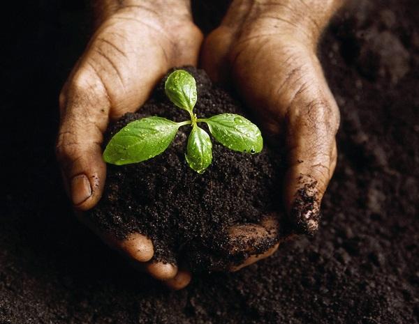 Как восстановить и повысить плодородие земли на дачном участке?