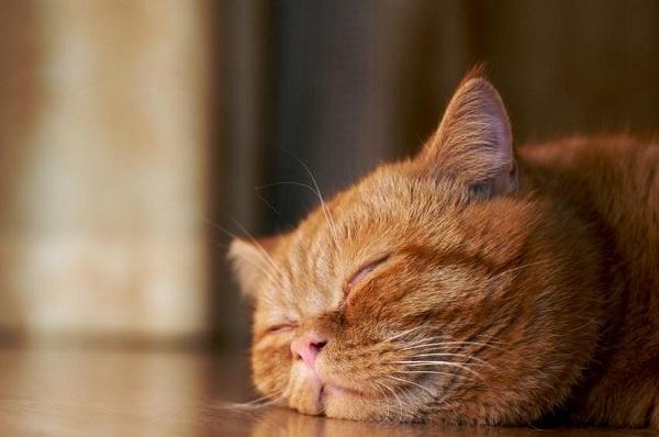 Инфракрасные обогреватели – тепло и уют вашего дома!