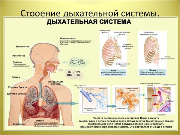 bolezni-dyxatelnoj-sistemy-1