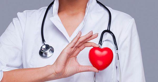 Устройство сердечнососудистой системы