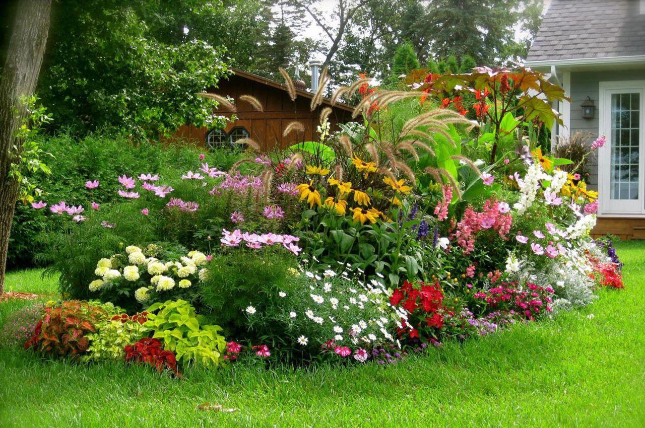 Виды растений для декоративного оформления дачи