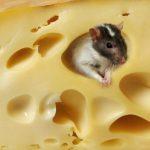 6 полезных советов по выбору качественного и вкусного сыра
