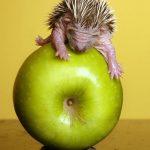 6 главных причин включить яблоки в свой рацион